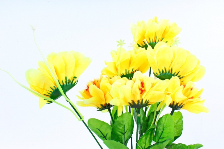 Анемоны  жёлтые