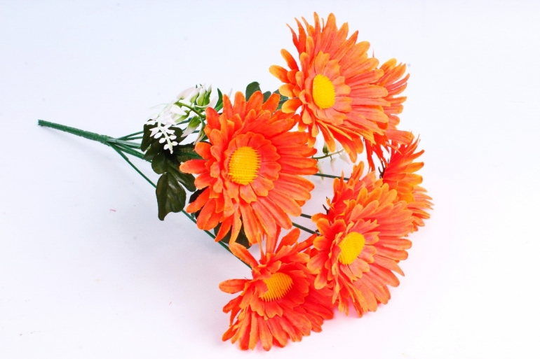 Астры  оранжевые