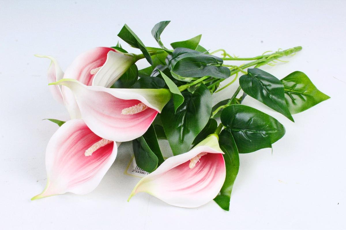 Роз гербер, цветы каллы купить днепр