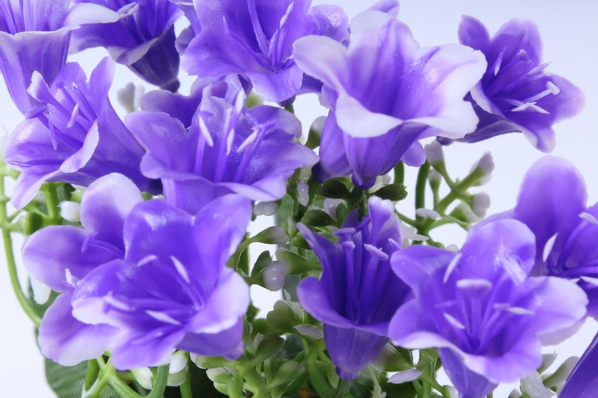 Живые цветы колокольчики купить москва