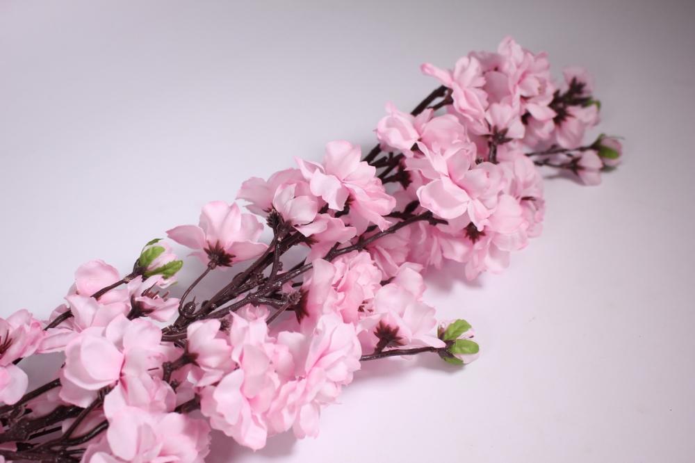 Цветы сакура живой купить