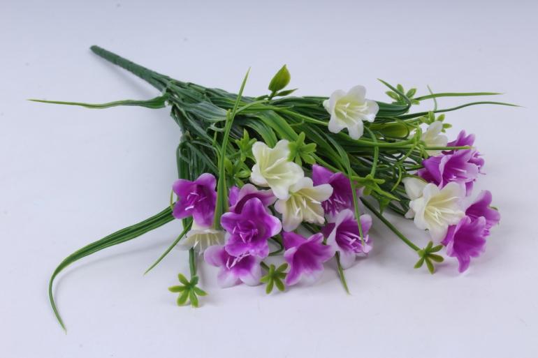 колокольчик кустовой пурпурно-белый