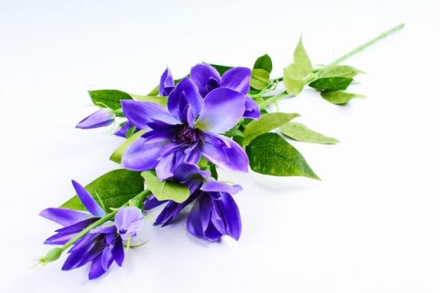 Клематис ветка  сине-фиолетовый SUN508