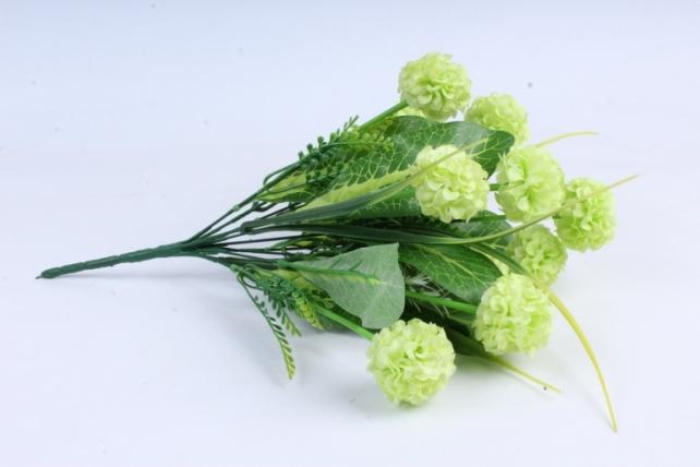 Гортензия салатовая