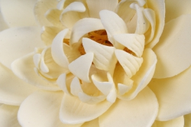 Лотос водоплавающий цветок LCW90  4016  (И)
