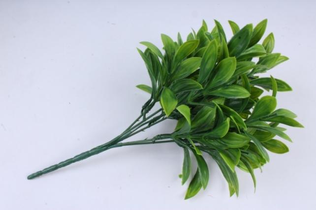 Ветка лавра зелёная