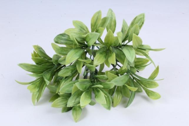 Ветка лавра салатовая