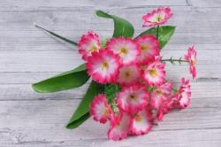 искусственное растение - примула бело-розовая