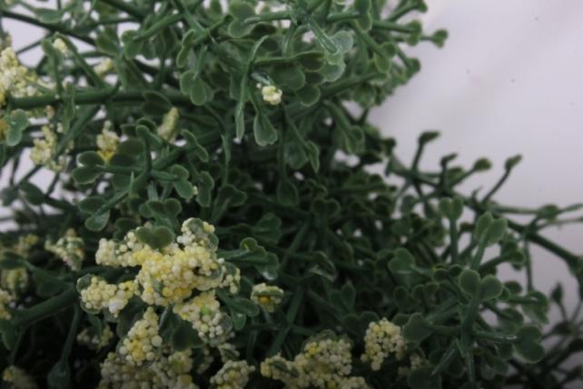 Искусственное растение - Веточки Светло-желто-салатовые с соцветием 20см  (6шт в уп)  GAP19  6446