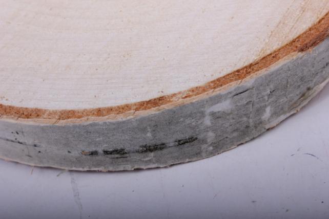 Спил березовый 17 см  шлифованный (1шт в сетке)