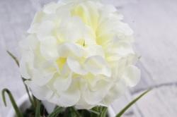 Цветочная композиция (И) -Хризантема белая в кашпо   HR-38328  8010