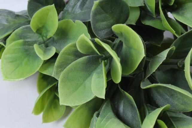 Искусственное растение -  Эвкалипт комнатный с корнями зелёный  Б10154