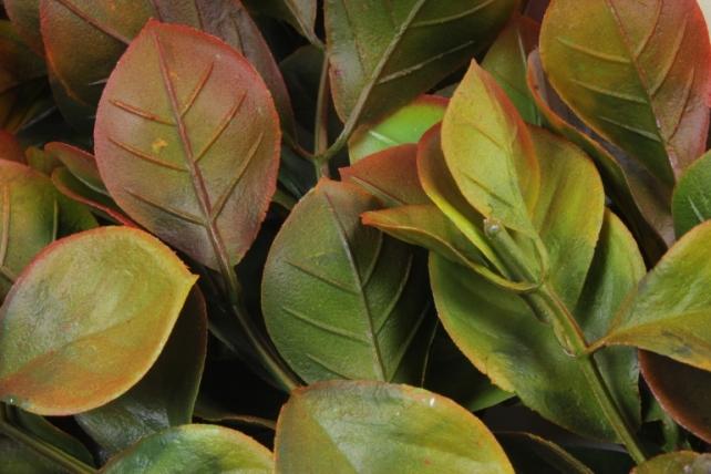 Искусственное растение -  Эвкалипт комнатный с корнями терракотовый Б10154