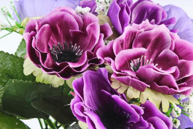 Анемона  фиолетовая