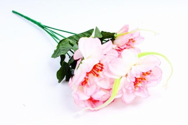 Анемоны  бело-розовые