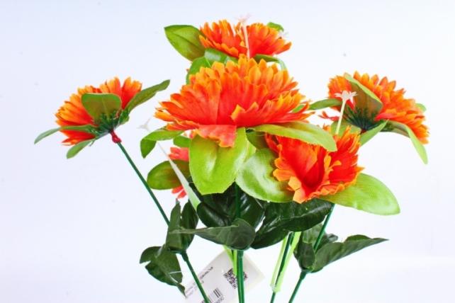 Анемоны  оранжевые