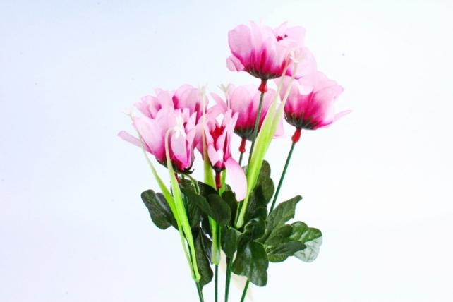 Анемоны  ярко-розовые