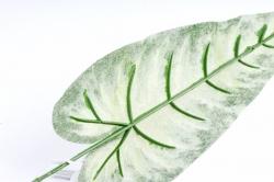Антуриум лист 072901