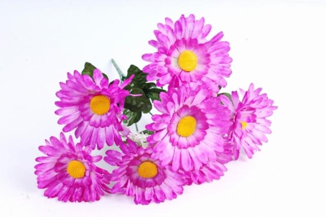 Астры  фиолетовые