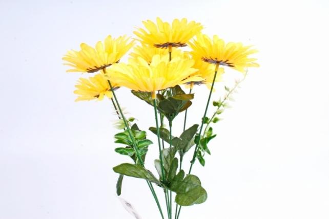 Астры  жёлтые