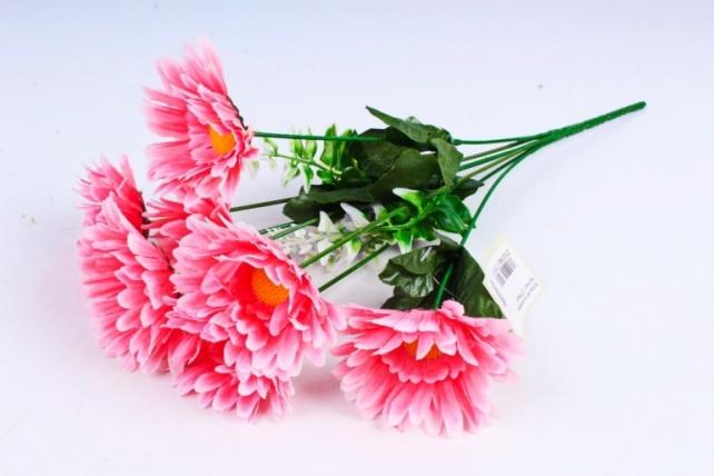 Астры  розовые