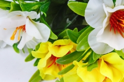 Азалия  бело-жёлтая
