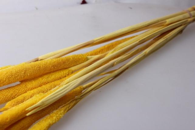 бабала цветная бабала жёлтый - сухоцветы 7695