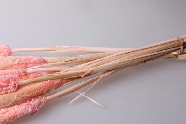 бабала цветная бабала розовый - сухоцветы 7695