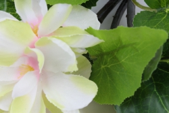бегония с цветком бело/розово/салатовая   k7go15fio   2727