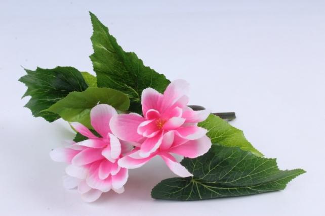 Бегония с цветком Розово-белая K7GO15ROZ    2734