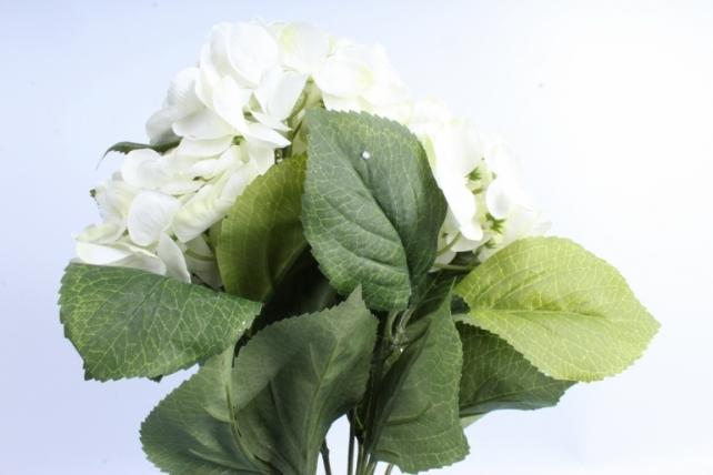 Букет Гортензии  5 веток белый SUN567