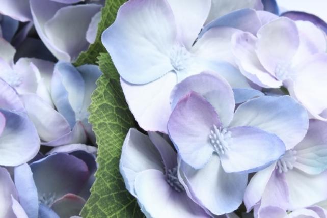 Букет Гортензии  5 веток голубой SUN567
