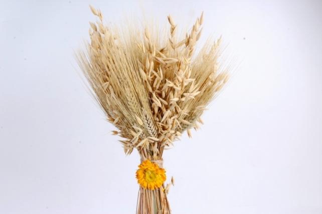 Букет из колосовых культур (пшеница, чумиза, овёс, бессмертник),