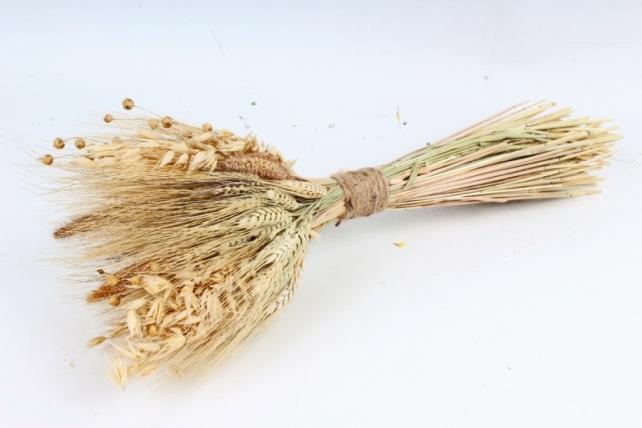 Букет из сухих колосовых культур и льна, 317 гр. (М) 0859
