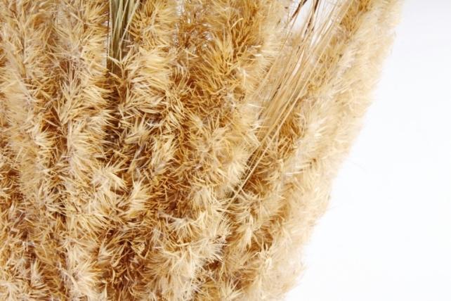 Букет из сухих колосовых культур и луговых трав,  152 гр. 0880