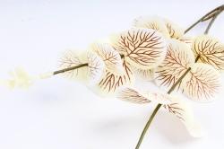 Эвкалипт ветка  персиковый 71699