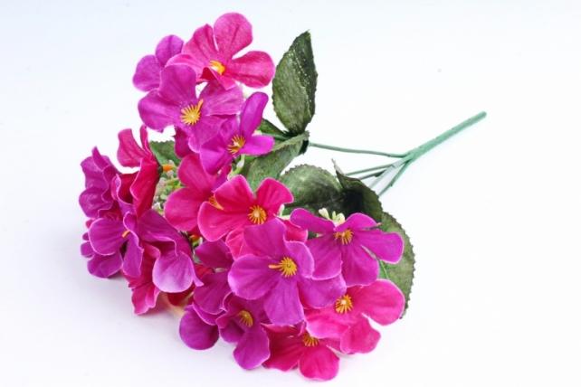 Фиалки  пурпурные