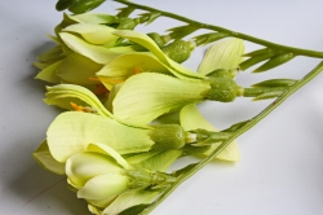 Фрезия 62 см (3 шт в уп) салатовая SUN328