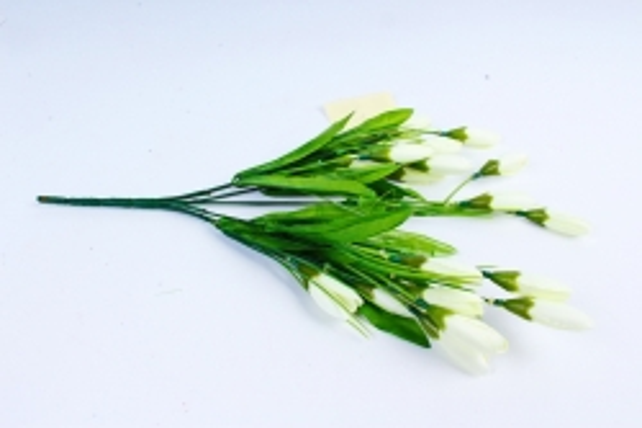 Галянтусы белые