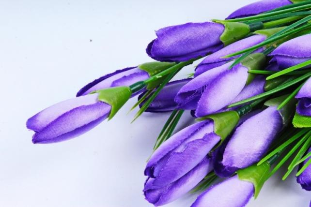 Галянтусы фиолетовые