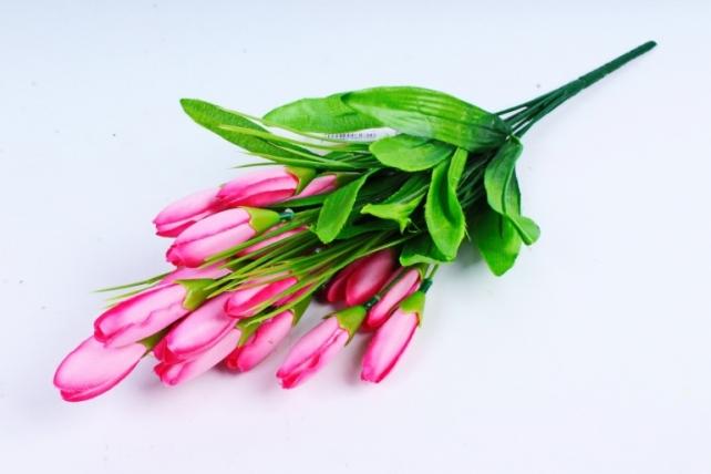 Галянтусы розовые