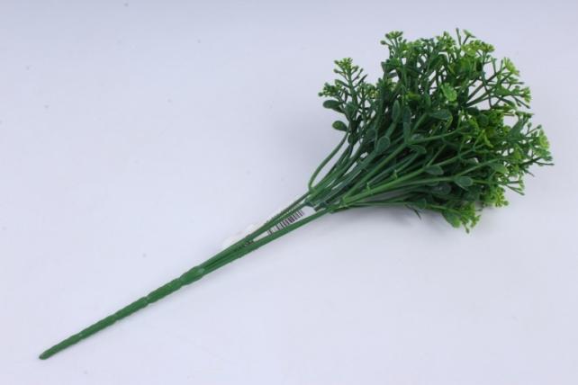 гипсофила зелёная