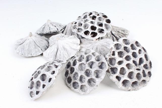 Головка лотоса сухоцвет белый 10-12см (10шт в уп) CS18B611-WH 8718