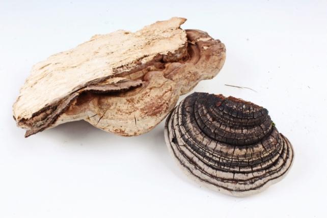 Гриб Трутовик натуральный (3-6 шт в уп)