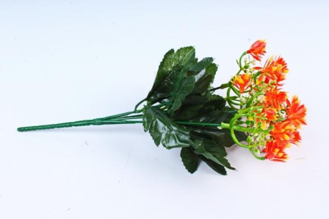 Гвоздичка китайская оранжевая
