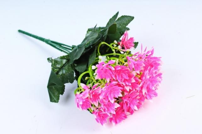 Гвоздичка китайская ярко-розовая