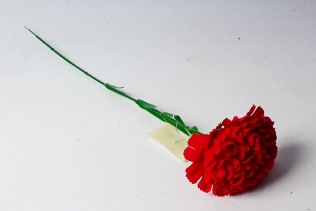 Гвоздика красная бархатная