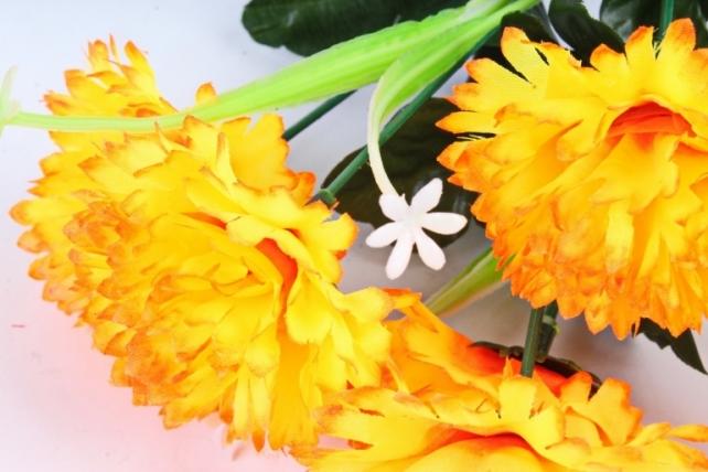 Гвоздики  оранжевые
