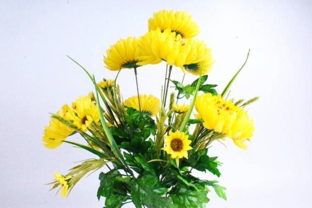 Хризантема жёлтая