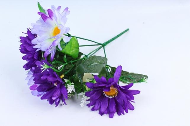 Хризантемы фиолетовые